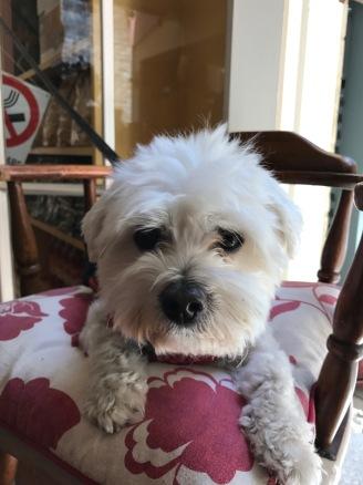 Luciana's gorgeous dog Oli.